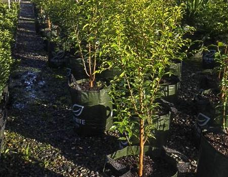 Oxford Park Nursery tree